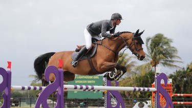 Details about  /Browband Boston Showquest Showing Horse Pony Competition