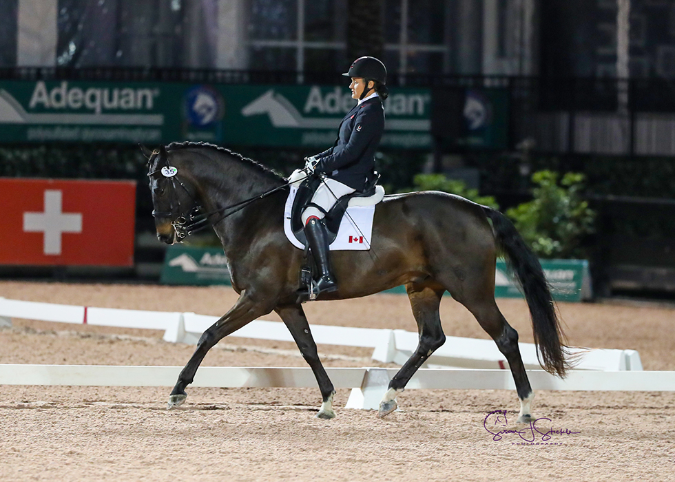 Lauren Barwick (CAN) lands the FEI Para Freestyle Grade III CPEDI3* on new ride Sandrino with 75.133%. ©️Susan Stickle.