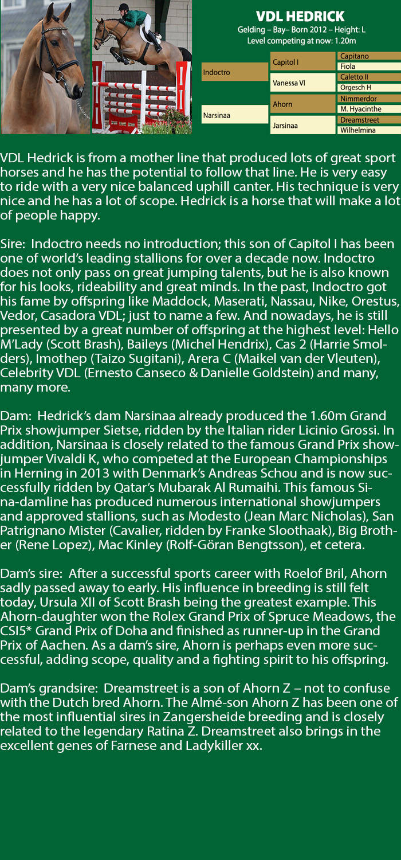 IndividualHorseforWeb_Hedrick